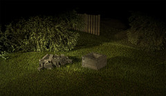 Backyard 01