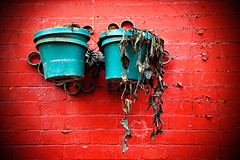 East Village Flower Pots (True Photagonist) Tags: street new city flowers urban eastvillage newyork building texture wall canon buildings photography manhattan bricks tiles flowerpots newyorkphotography