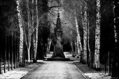 Chopin: Preludes op.28 / No.  20 (Vlachbild) Tags: street tree germany blackwhite europe cemetary daily environment birch crow trier rhinelandpalatinate sonystf135mmf28t45 sonyslta65 hauptfriedhoftrier