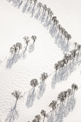 Contemplation (Aerial Photography) Tags: schnee winter white snow tree by landscape mood aerial m rows monochro