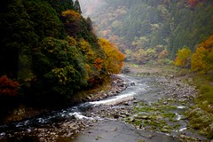 Gorge (Thomo13) Tags: autumn trees mist green fall leaves japan forest river kyoto raw valley gorge canoneos5dmarkii gettyimagesjapan13q1