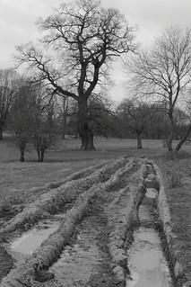 At Croft Castle