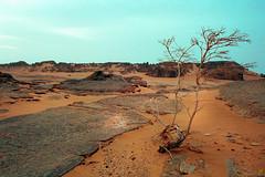 De l'Eau, svp... Water, please... (Jp Racine) Tags: africa mountain montagne trek algeria sand desert sable marche algrie afrique immensity immensit tassiliduhoggar