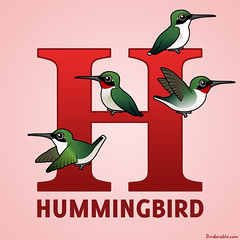 H is for Hummingbird! (birdorable) Tags: