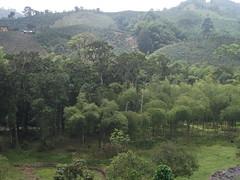 On the road in Colombia (Enrico Fabro) Tags: colombia jungle pereira enricofabro