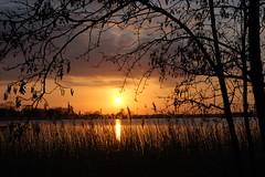 Sunset, Oulton Broad, Suffolk - a natural arched frame (Kirkleyjohn) Tags: sunset england water silhouette reeds atardecer evening suffolk sonnenuntergang pôrdosol eastanglia coucherdusoleil oultonbroad