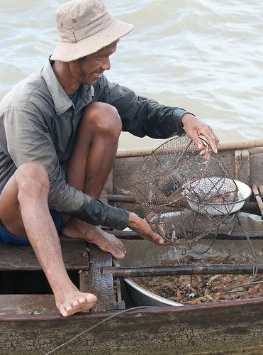 Checking shrimp traps in Tonle Sap, Cambodia. Photo by Patrick Dugan, 2008.