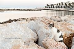 Ispeziongatto! (Elettra | Panzarino | PhotoStory) Tags: sea cats animal animals cat nikon mare porto di gatto puglia gatti molo animali animale bari mola apulia d3000 nikond3000
