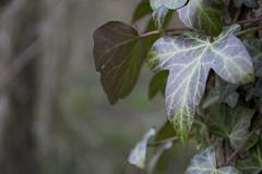 DSC_0703 (dan-morris) Tags: wood sunset white black tree green wet field grass forest photo leaf moss spring nikon shoot berries bokeh bark dew 1855mm dslr depth vr damp f3556g 1855mmf3556gvr d3100