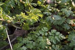 DSC_0678 (dan-morris) Tags: wood sunset white black tree green wet field grass forest photo leaf moss spring nikon shoot berries bokeh bark dew 1855mm dslr depth vr damp f3556g 1855mmf3556gvr d3100