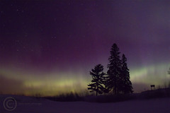 Watercolors on the Willow (MAP31713_971) (maryanne.pfitz) Tags: trees winter snow nature skyscape stars landscape nightsky northernlights auroraborealis willowflowage