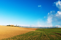 Lined Up (Philipp Klinger Photography) Tags: italien november blue autumn trees light sunset shadow sky italy orange cloud house color colour tree green fall nature up field clouds landscape alley nikon san colorful warm europa europe italia skies angle horizon hill wide vivid wideangle bluesky line hills val tuscany crete fields cypress siena colourful agriculture toscana valdorcia bagno philipp autumnal rolling rollinghills d800 toskana cretesenesi castiglione lined vignoni dorcia bagnovignoni klinger orcia quirico sanquiricodorcia senesi castiglionedorcia cypressalley dcdead nikond800 philippklinger