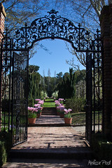 Gateway to the Wild Gardens (San Francisco Gal) Tags: california nature fence garden landscape spring gate arch tulips wroughtiron pots walkway woodside filoli 2013