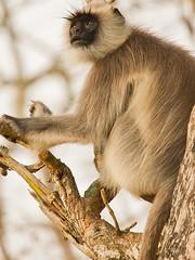 6E6A0016 (nikmar08) Tags: park wild india cat canon nationalpark wildlife tiger reserve safari jungle 5d karnataka mkiii mk3 bandipur mark3 markiii tigerreserve 100400 5d3 5dmarkiii 5diii 5dmark3