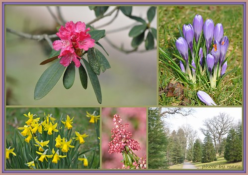 Spring at Bedgebury Pinetum