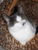 "Pet of the Week: Kitty Purry • <a style=""font-size:0.8em;"" href=""http://www.flickr.com/photos/42888877@N06/8602970766/"" target=""_blank"">View on Flickr</a>"