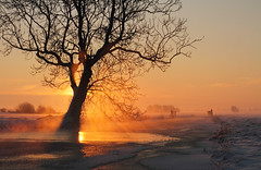 Winter sunrise (Pepijn Hof) Tags: morning winter mist holland colour nature dutch field fog canon landscape licht horizon nederland natuur explore 7d fields tamron polder ochtend landschap zuidholland hekendorp haastrecht vlist southholland stralen explored hoenkoop