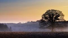 Days end (Eric Goncalves) Tags: light sunset sky sun mist tree nature forest landscape evening nikon dusk earth dean array forestofdean nikond7000 ericgoncalves