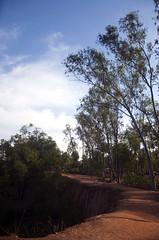 The path (Tapas Biswas) Tags: morning travel sky india color colour tree nature outdoors nikon day image artistic vivid bengal westbengal tranquilscene d90 santiniketan nikond90 khoyai nikod90 nikond9o