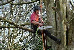 Let him Dangle (Livesurfcams) Tags: chainsaw arborist stihl treesurgeon nikonv1
