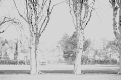 Messing around (anthonyfalla) Tags: trees blackandwhite abstract housing tolworth