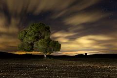I Want to be a Star (Explore) (raul_lg) Tags: sky espaa tree night canon stars arbol noche spain cielo nubes estrellas nocturna campo manfrotto castillalamancha mark3 markiii largaexposicion raullopez canon1635 raullg