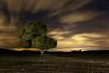 I Want to be a Star (Explore) (raul_lg) Tags: sky españa tree night canon stars arbol noche spain cielo nubes estrellas nocturna campo manfrotto castillalamancha mark3 markiii largaexposicion raullopez canon1635 raullg