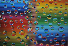 Rainbow drops (Tony Dias 7) Tags: rainbow macromondays