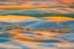 Spring Snow, Palouse (Chip Phillips) Tags: trees snow spring butte northwest wheat farming cottonwood inland rolling palouse steptoe