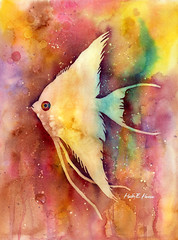 Angelfish II (Hailey E Herrera Art Journey) Tags: fish angelfish