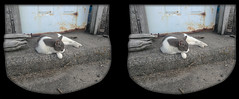 Cyber Chillin' 6 - Parallel 3D (DarkOnus) Tags: pennsylvania buckscounty huawei mate8 cell phone 3d stereogram stereography stereo darkonus closeup cyber cat feline sleeping sleep resting chillin animal mammal parallel framed
