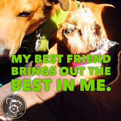 I am a better person because a Yorkie is in my life. (itsayorkielife) Tags: yorkiememe yorkie yorkshireterrier quote