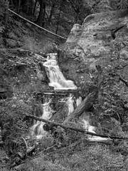 Waterfall near Sunspot, NM (BW) (jamesclinich) Tags: newmexico nm waterfall trees availablelight tripod olympus omd em10 jamesclinich corel paintshoppro topaz denoise adjust clarity detail blackwhite bweffects monochrome