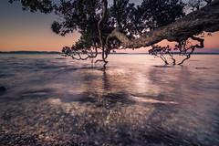 (Lens Cap1) Tags: fujifilm xt1 dusk tree longexposure water