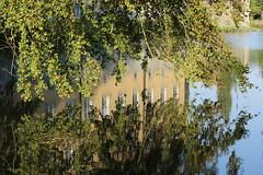 IMG_7851 (Padeia) Tags: 2016 padeia canon germany dslr radtour tree baum water wasser schlossdyck reflection spiegelbild outdoor