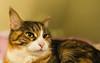 Mikko (1) (grahamrobb888) Tags: nikond800 sigma20mmf18 cat pet indoors mikko resting bed