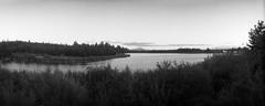 Twilight at the pond (ASHLANDJET) Tags: film widelux f7 swinglens panorama wideangle kodak trix400 35mm analog blackandwhite monochrome gilchrist oregon millpond littledeschutes vintagecamera centraloregon