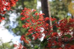 Mercer Arboretum and Botanic Gardens (im2fast4u2c) Tags: mercer arboretum botanic gardens