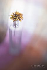 Prism (LanaScape Photos) Tags: typical alt lensbaby flower muse colors blur
