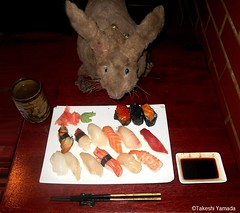 Dr. Takeshi Yamada and Seara (Coney Island Sea Rabbit) at the Sake Japanese sushi buffet restaurant in Brooklyn, NY on March 27, 2016.  20160527Fri DSCN6206=3030mC. assorted sushi (searabbits23) Tags: searabbit seara takeshiyamada  taxidermy roguetaxidermy mart strange cryptozoology uma ufo esp curiosities oddities globalwarming climategate dragon mermaid unicorn art artist alchemy entertainer performer famous sexy playboy bikini fashion vogue goth gothic vampire steampunk barrackobama billclinton billgates sideshow freakshow star king pop god angel celebrity genius amc immortalized tv immortalizer japanese asian mardigras tophat google yahoo bing aol cnn coneyisland brooklyn newyork leonardodavinci damienhirst jeffkoons takashimurakami vangogh pablopicasso salvadordali waltdisney donaldtrump hillaryclinton endangeredspecies save