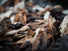 P8190017 (Varga dm (Vadam)) Tags: wood texture bokeh outdoor nature dof sigma olympus