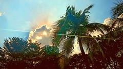 Latitud 3 grados norte (Bonsailara1) Tags: bonsailara1 trpico tropic tropical palms palmeras hotel sun clouds martes nubes nwn