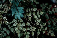 Botanical Series-10 (Elena Picart) Tags: elenapavlova floralartprint interiors modern minimal flowerphotographs floralart botanicalprint flowerphotography garden spring decor naturedecor blossoms picargallery