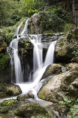 Cipresseta - Bosco degli Zappini (Jeanluke83) Tags: cipresseta fontegreca bosco degli zappini nikon d5100