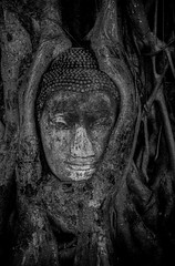 buddah head in tree (tobiasbegemann) Tags: buddah head tree bw black white thailand tobias begemann saarbrcken germany world street landscape people animal travel nature photography creative commons flickr best of top 50