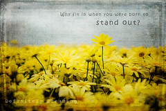 Born To Stand Out... (DefinitelyDreaming) Tags: flowers floral colourful cheerful motivational quote wisewords motivationalmonday drseuss 2lilowls textures