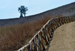 (robra shotography []O]) Tags: fence fencefriday