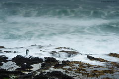 Getting the Shot (Dan Mihai) Tags: ocean camera sea storm nature water oregon danger underground coast dangerous rocks waves photographer risk pacific tripod dramatic rocky stormy blowhole rush pacificnorthwest spoutinghorn brave thor drama yachats daring capeperpetua courageous risky thorswell cookschasm