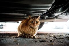 _DSC2062 (Stagnant Life & Bearangel) Tags: street cute car cat nikon kitten 28mm kitty   afs  d600 f18g
