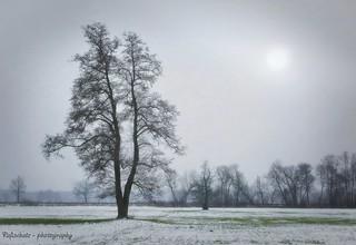 lonely tree near Hassendorf, Lower saxony